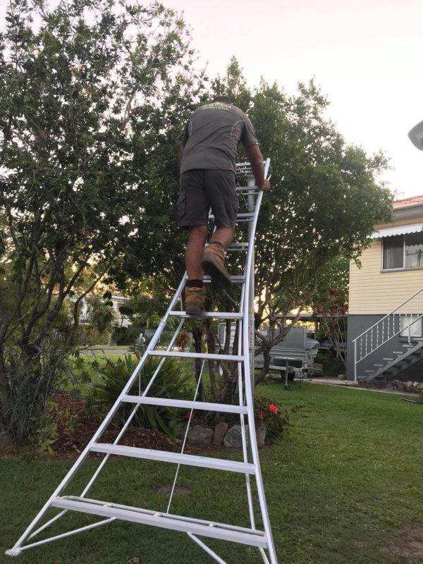 Tree Mate Tripod Ladder Australia Brisbane