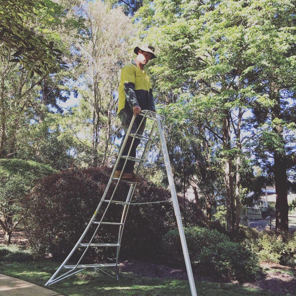 Tripod Ladder Tree Mate Brisbane Ipswich Part 2