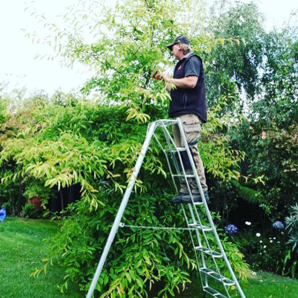 Tripod Ladder delivery to Australia Tasmania