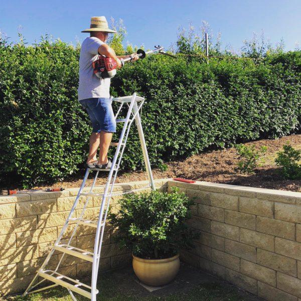 Tripod Ladder Brisbane Gardening use